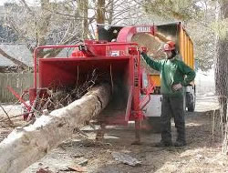 Tree Removal in Glendale